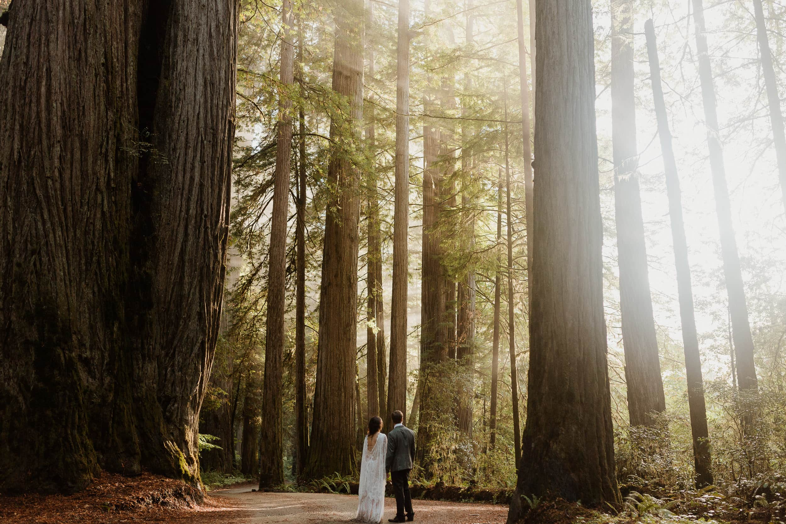 tiny couple amongst giant redwood trees